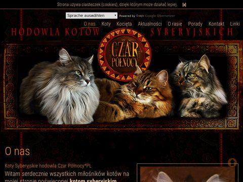 Koty syberyjskie Czar Północy*PL