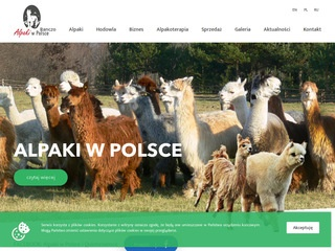 Alpaki.pl w Polsce ranczo Bujenka